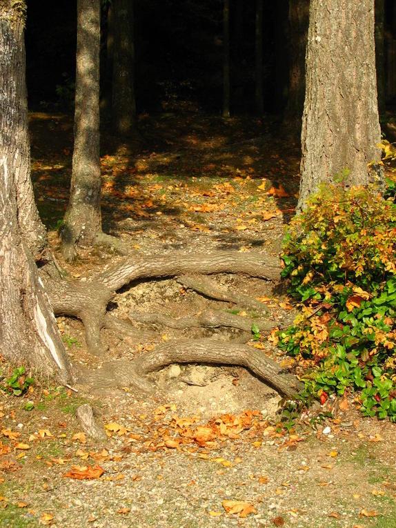Cultus Roots
