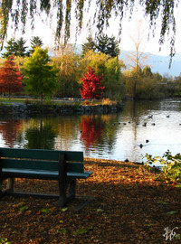 Photo: Fall Day at Sardis Park