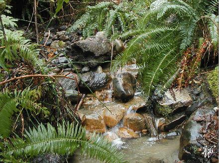 5- Forest Stream