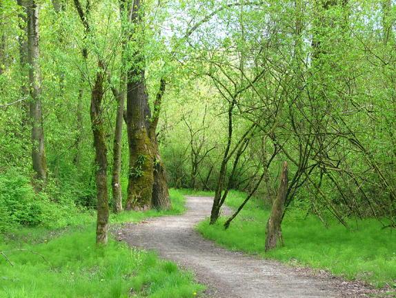 11- Trans-Canada Trail