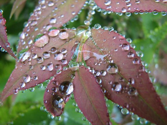 47- Garden Dewdrops