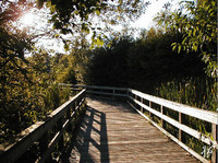Photo: 6- Mill Lake boardwalk