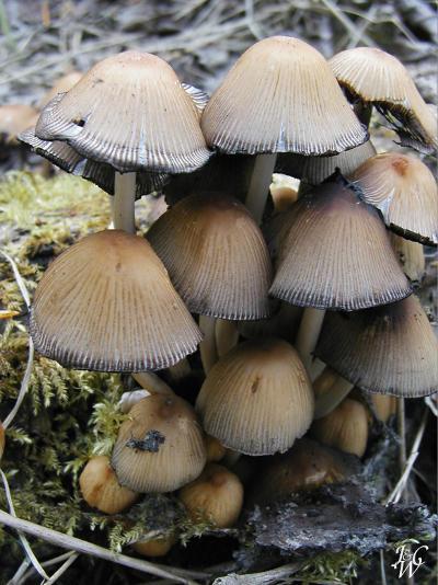 8- Mushrooms