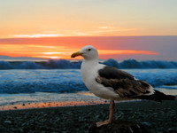 Photo: 42- Seagull on the beach