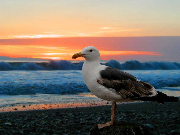 42- Seagull on the beach