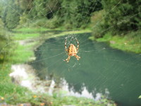 Photo: Spider in Web